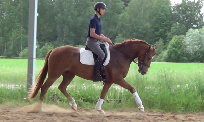 Dressage youngster by Bon Coeur