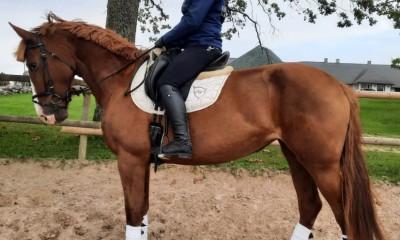 Tori horse mare Väge